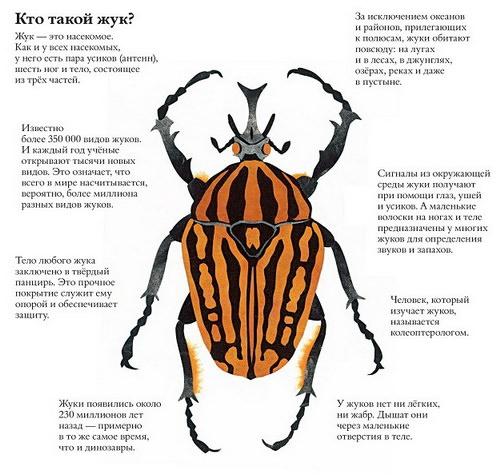 """Отзыв о книге """"В мире жуков. Интересные факты о животных"""""""